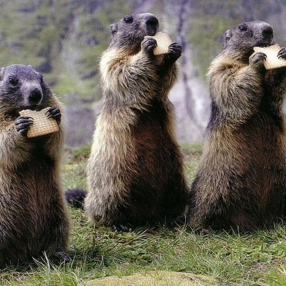 Les Marmotteam